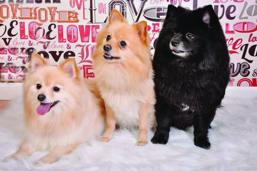 Madison College student Caylei Wright's experiences as the owner of three Pomeranians, pictured at left, have taught her a great deal about what people should consider before adopting a pet.
