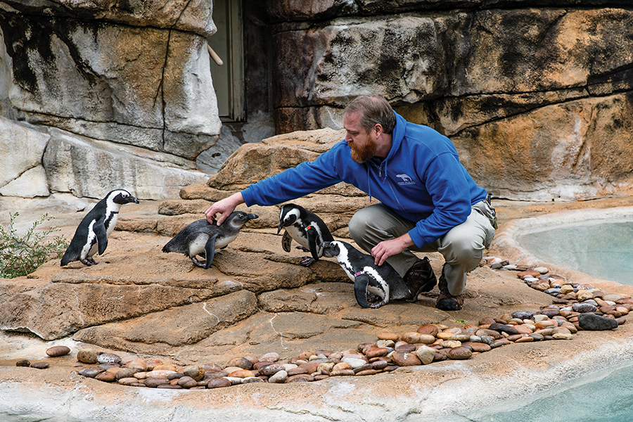Gary Hartlage, a zookeeper at Henry Vilas Zoo in Madison, works with the penquins inside their enclosure.
